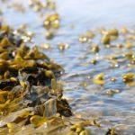 海苔の健康効果は予想以上にすごかった!毎日摂りたい海藻パワー☆健康カプセル!元気の時間2018年12月2日放送