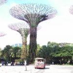 シンガポール旅行_ガーデンズバイザベイ周辺