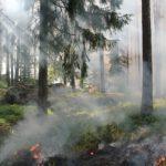人為的?オーストラリアの大規模火事の原因はユーカリの木による自然発火ではない?