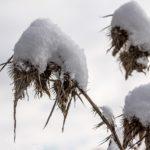 関東・東京周辺の積雪予想!JRや飛行状況・運休・運行状況について