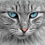 御朱印の猫モチーフは猫の日限定の可愛いデザイン!猫好きさん必見!