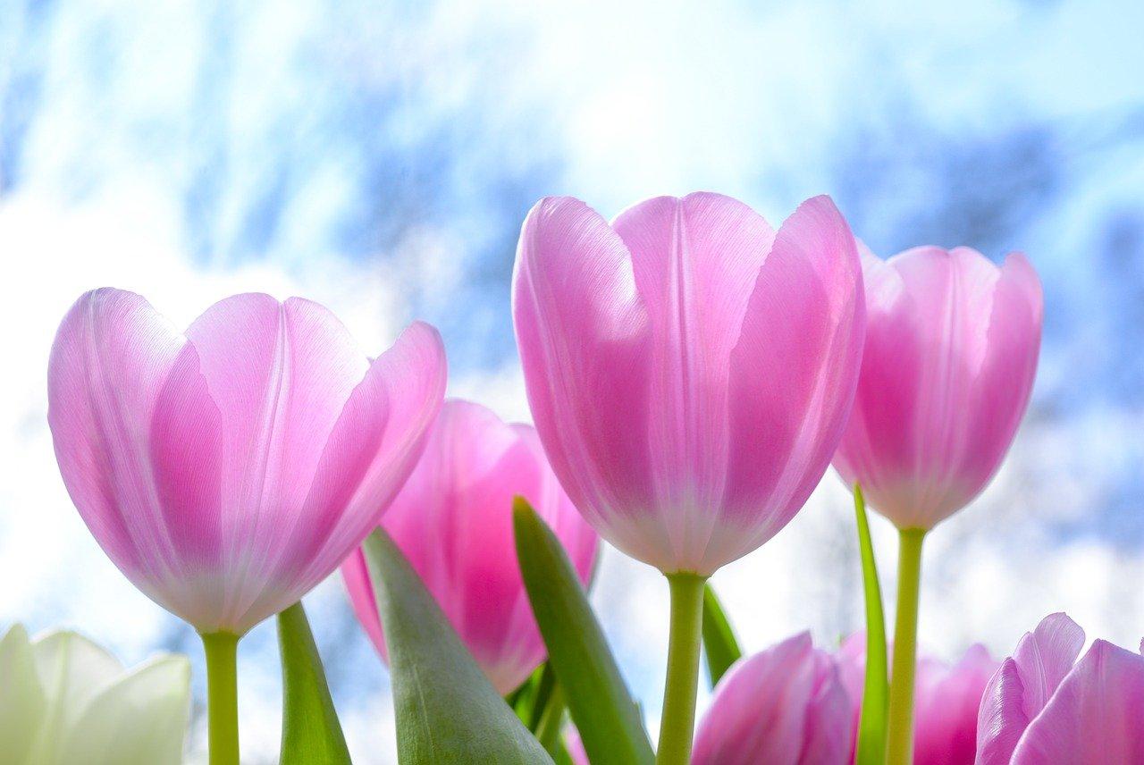 【チューリップ】折り紙で立体型な花束の作り方!子供でも簡単!茎や葉っぱも。