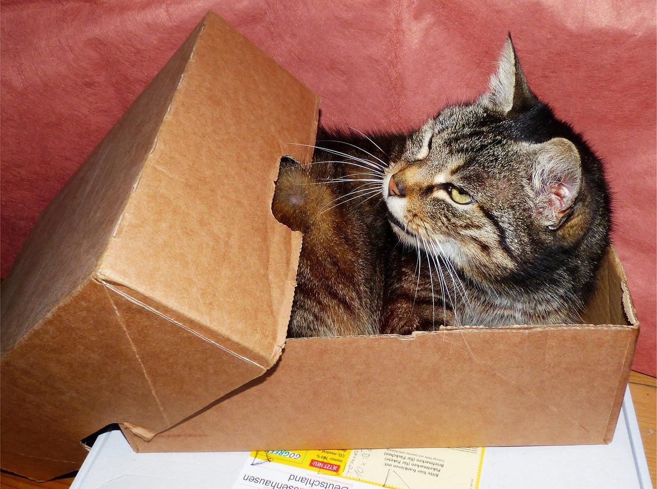 猫も暑いニャ~!暑さ対策アイディアや熱中症対策グッズおすすめ5選!