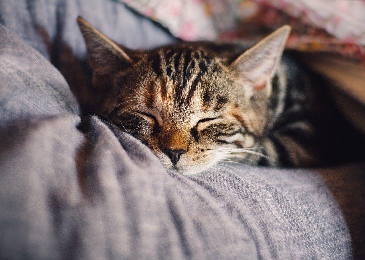 猫が熱中症にならないようにするためのポイント